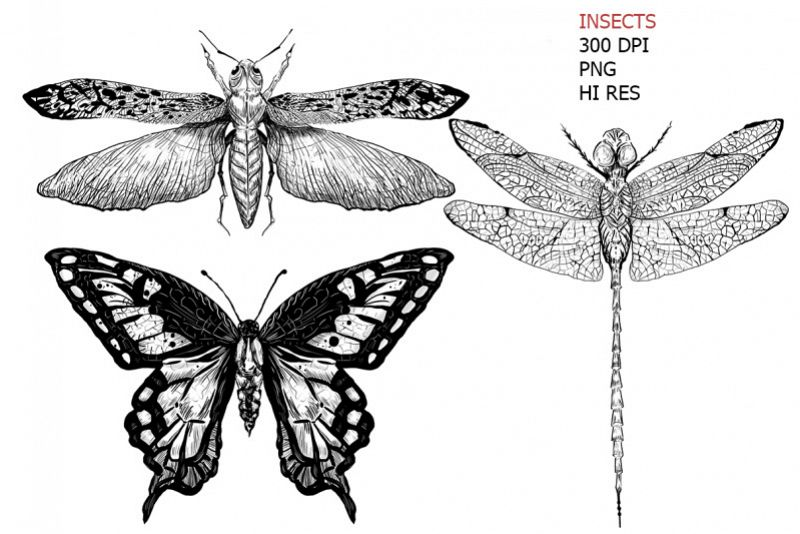 3 hand drawn vintage black insects art sketches example image 1