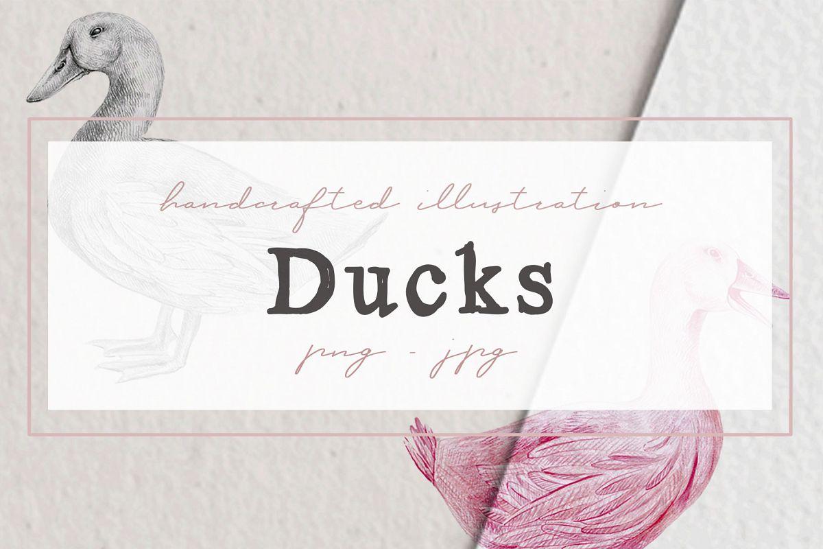 Hand drawn Ducks Illustrations example image 1