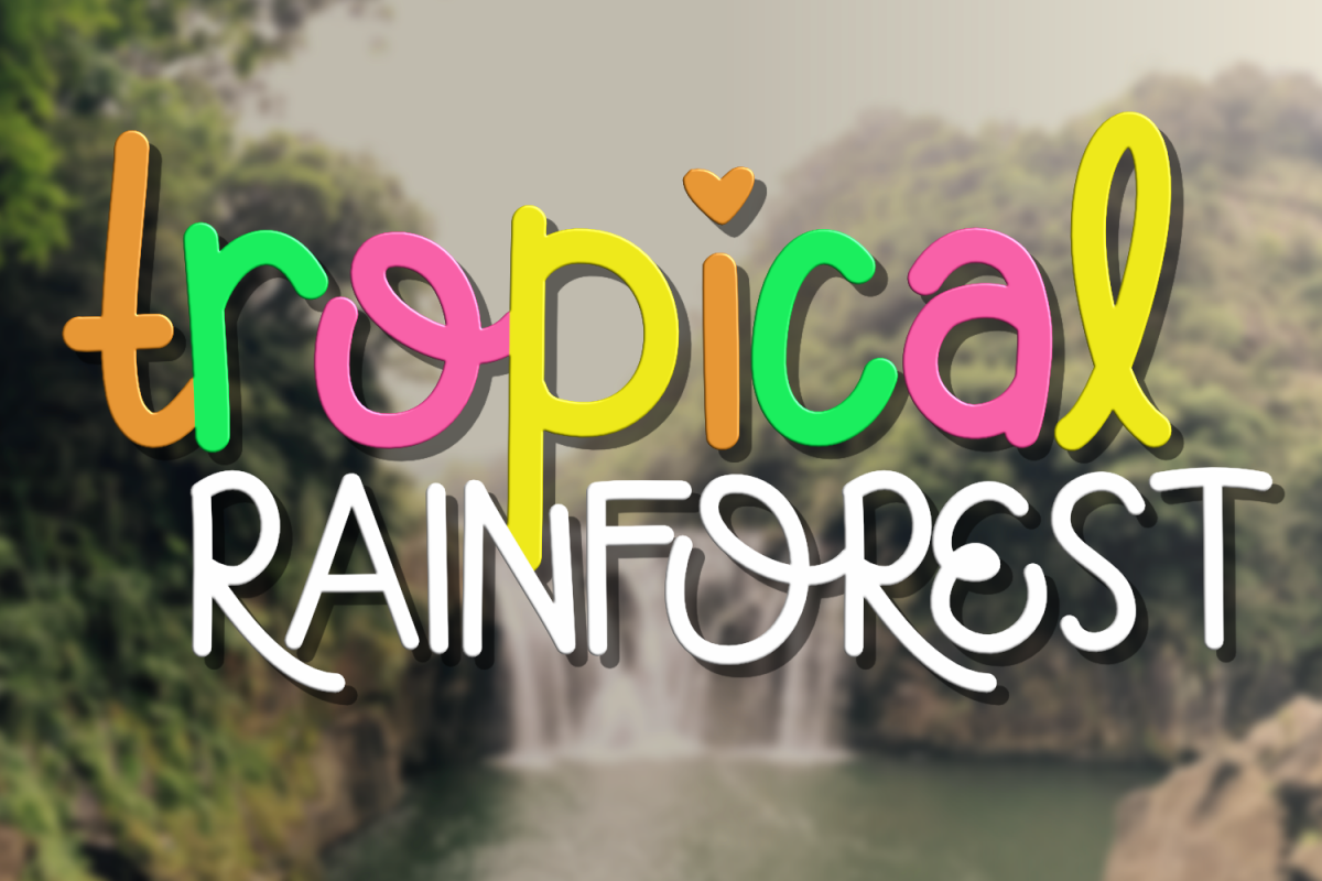 Tropical Rainforest example image 1