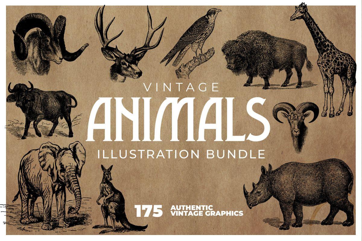 175 Vintage Animals Illustrations