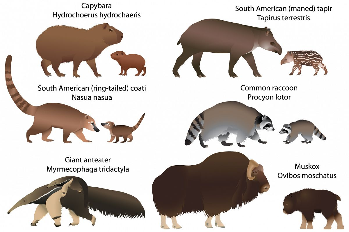 Animals of America with cubs example image 1