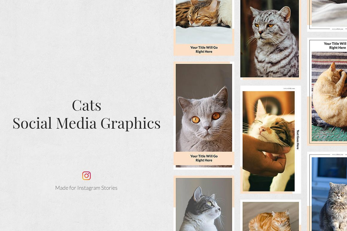 Cats Instagram Stories example image 1
