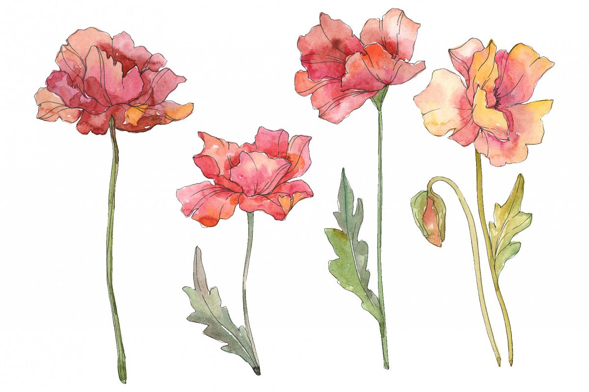 Poppy red Watercolor png example image 1