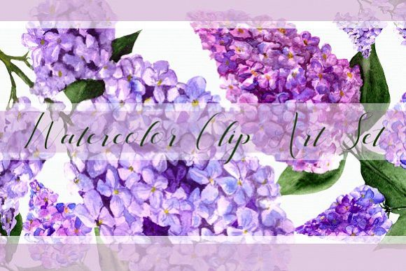 Watercolor Lilac Flowers Clipart Set example image 1
