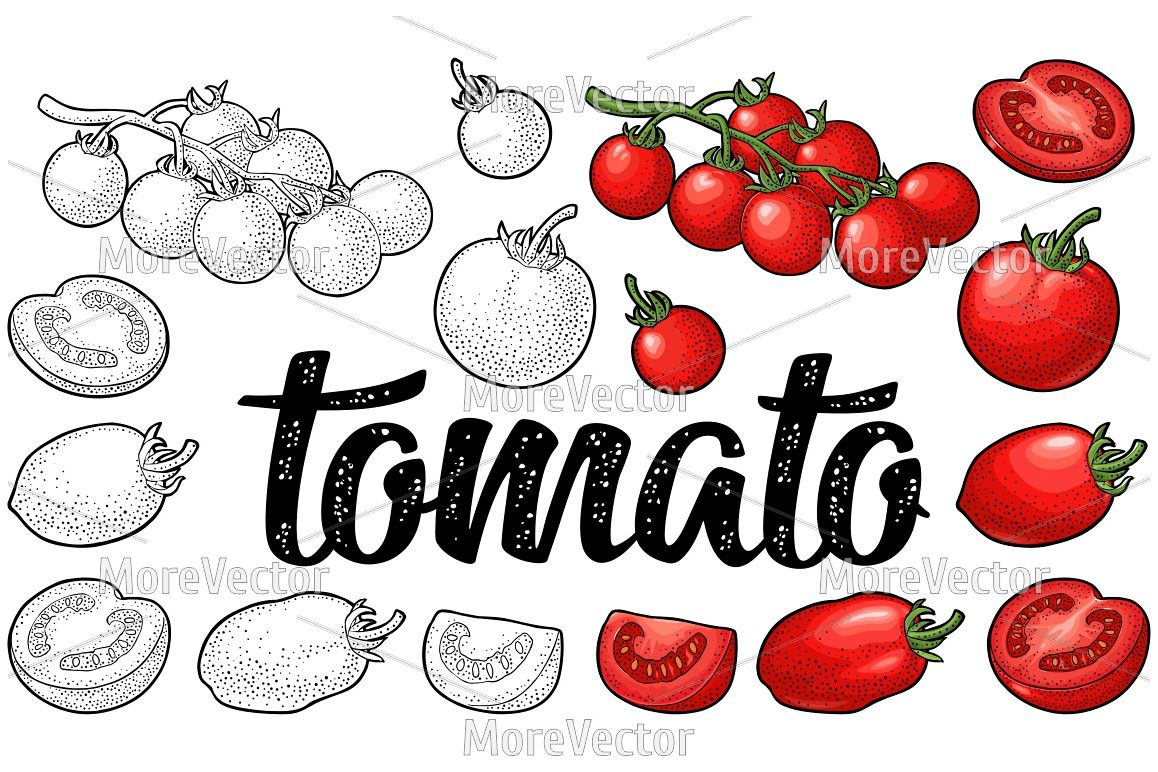 Set of hand drawn tomatoes and calligraphic lettering example image 1