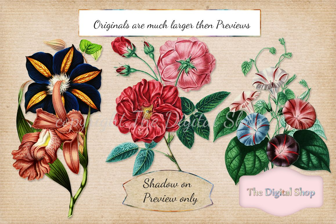 Vintage Flowers Collection example image 1
