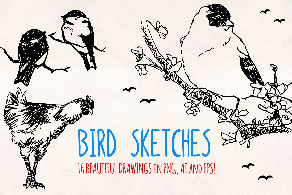 16 Bird Sketch Elements Hand Drawn Vectors example image 1