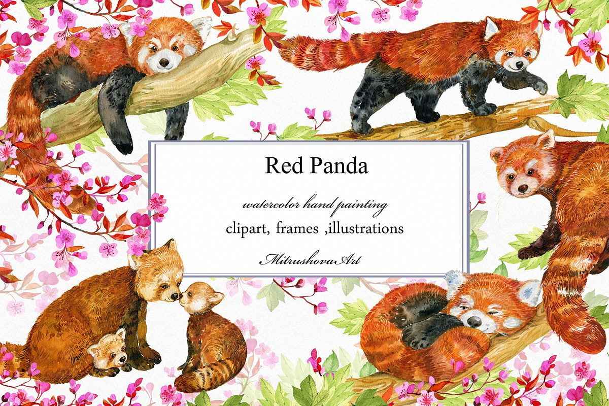 Red Panda ,watercolor illustrations example image 1