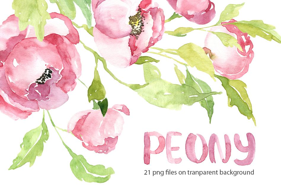Pink watercolor peony PNG collection example image 1