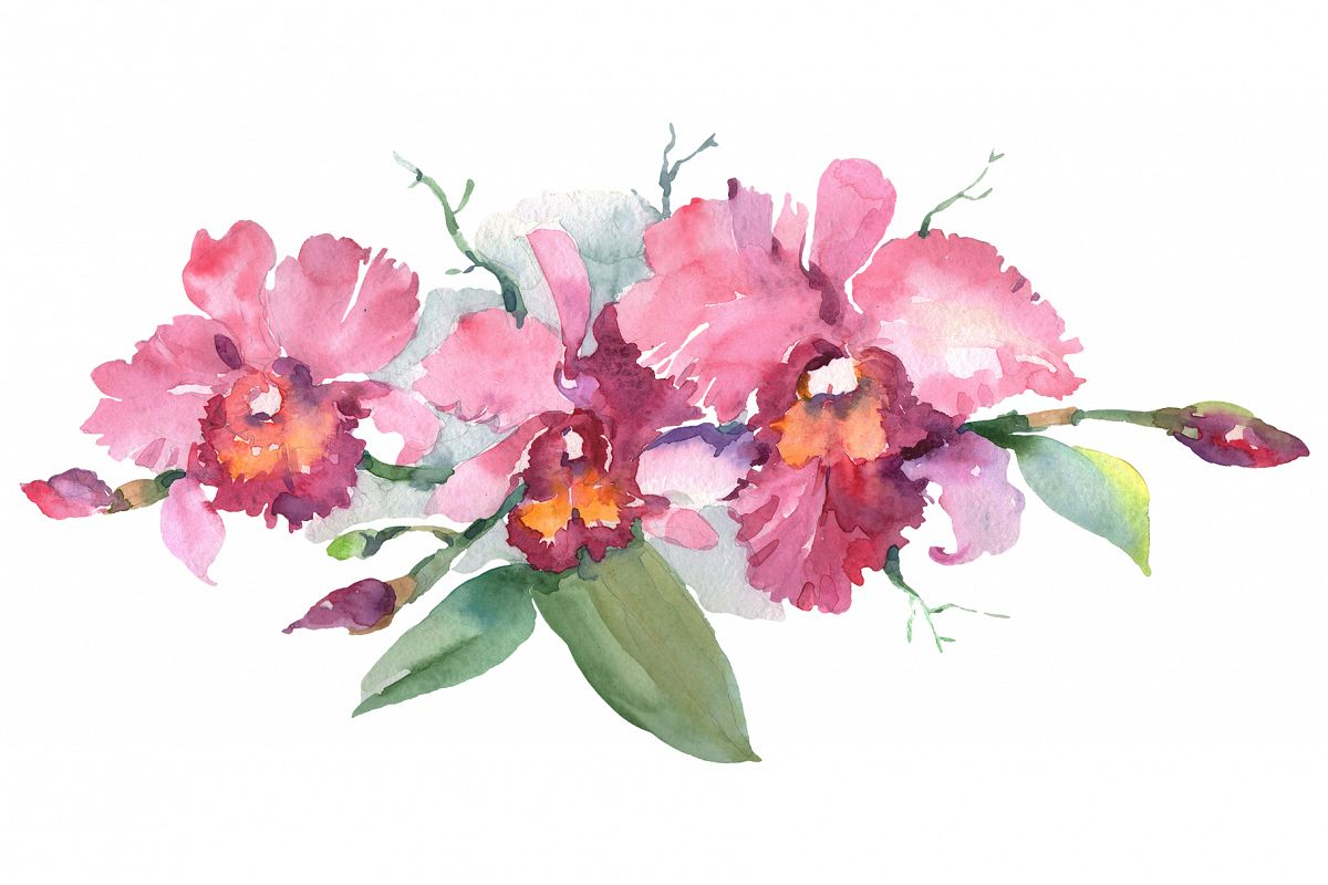 Branch of pink orchids watercolor png example image 1