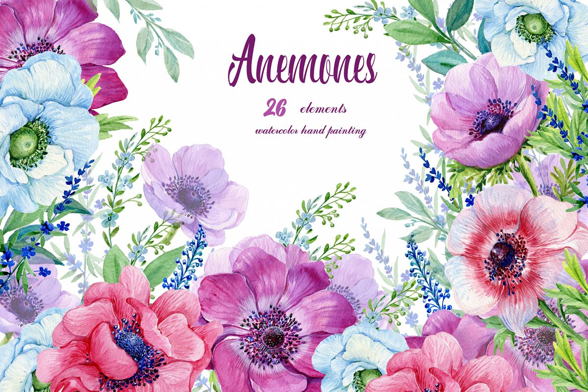 Anemones Watercolor Flowers Clipart Floral Elements