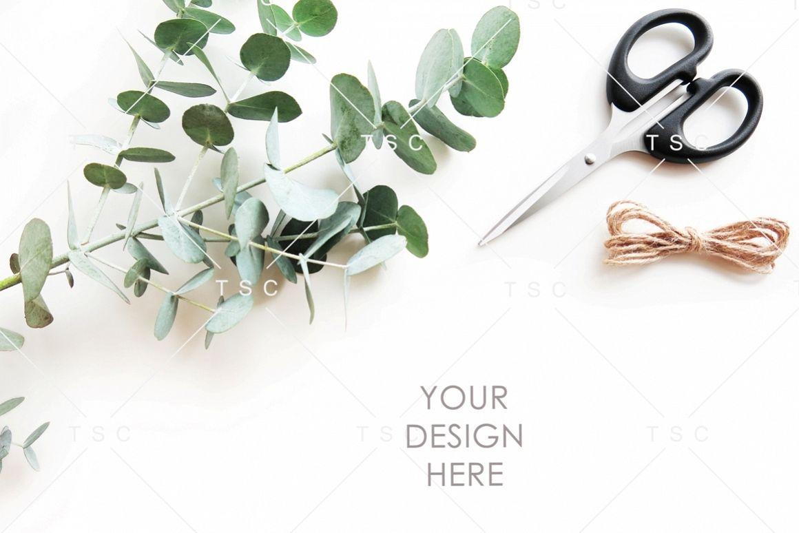 Eucalyptus Leaves Stock Photo example image 1