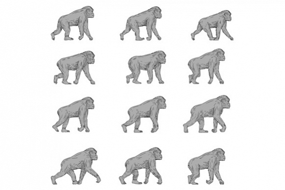 Chimpanzee Walking Cycle Collection Set example image 1