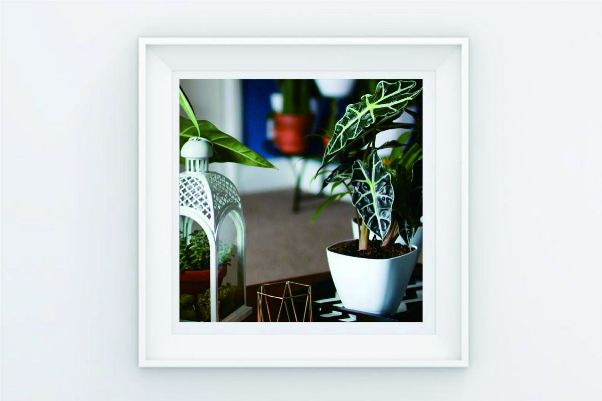 FRAME POSTER PLANT DECORATION example image 1