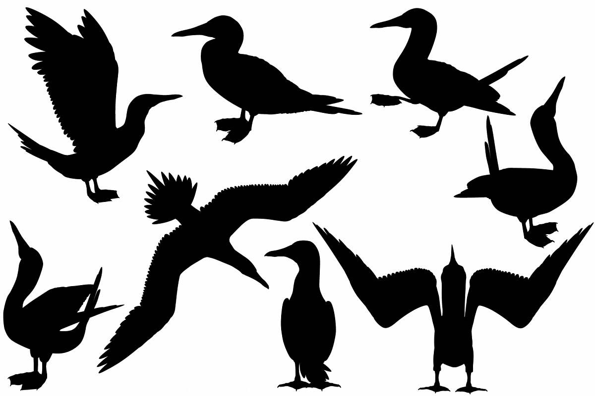 Blue-footed booby silhouette example image 1