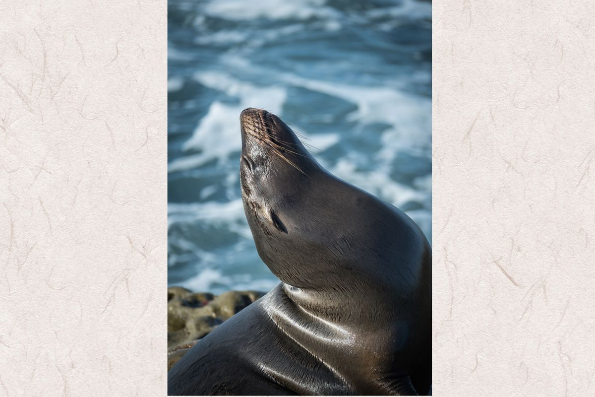 Seal photo 16 example image 1