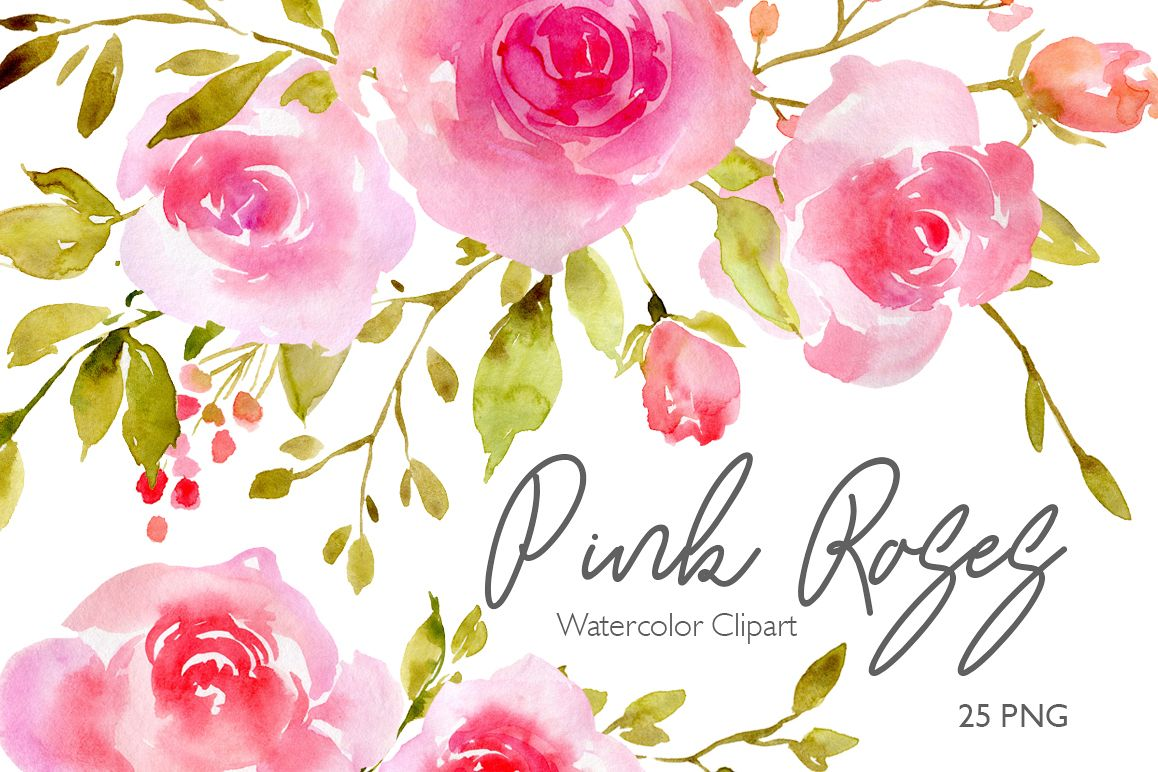 Pink Blush Watercolor Flowers Roses Png 79941 Illustrations