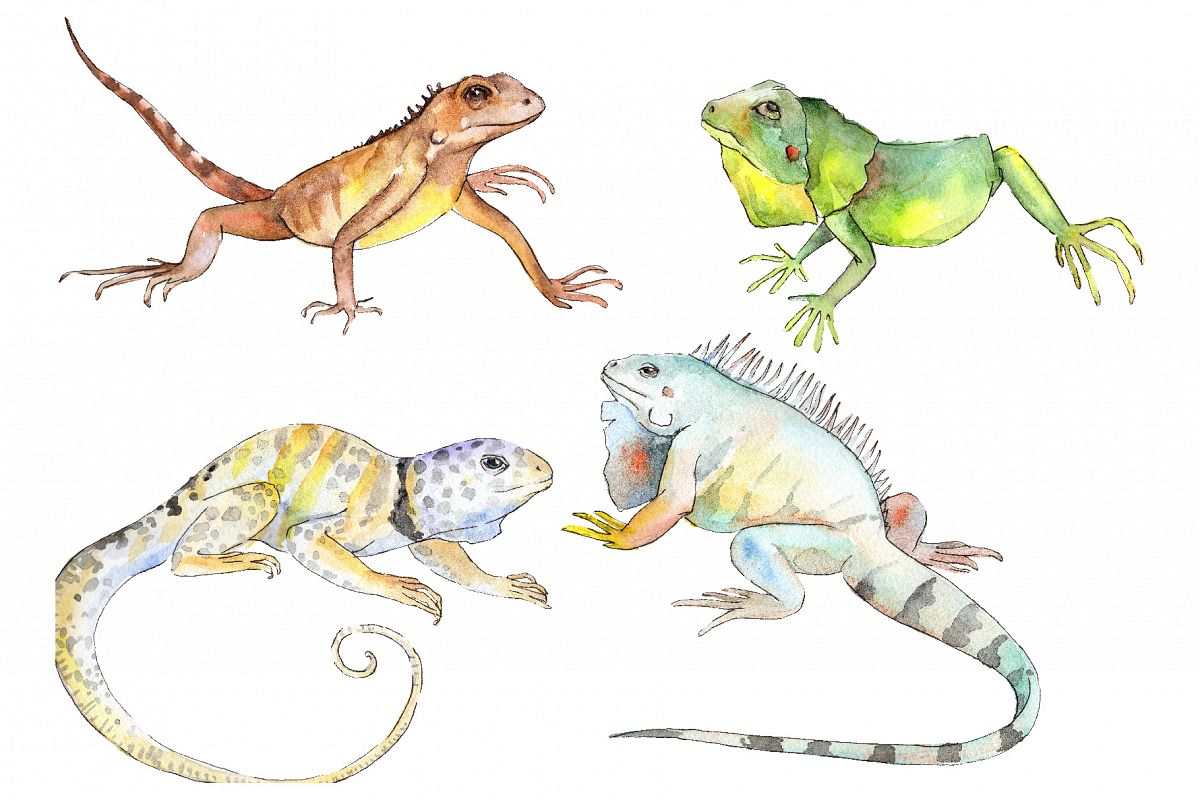 Iguana-1 Watercolor png example image 1