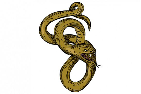 Viper Coiled Ready To Pounce Drawing example image 1