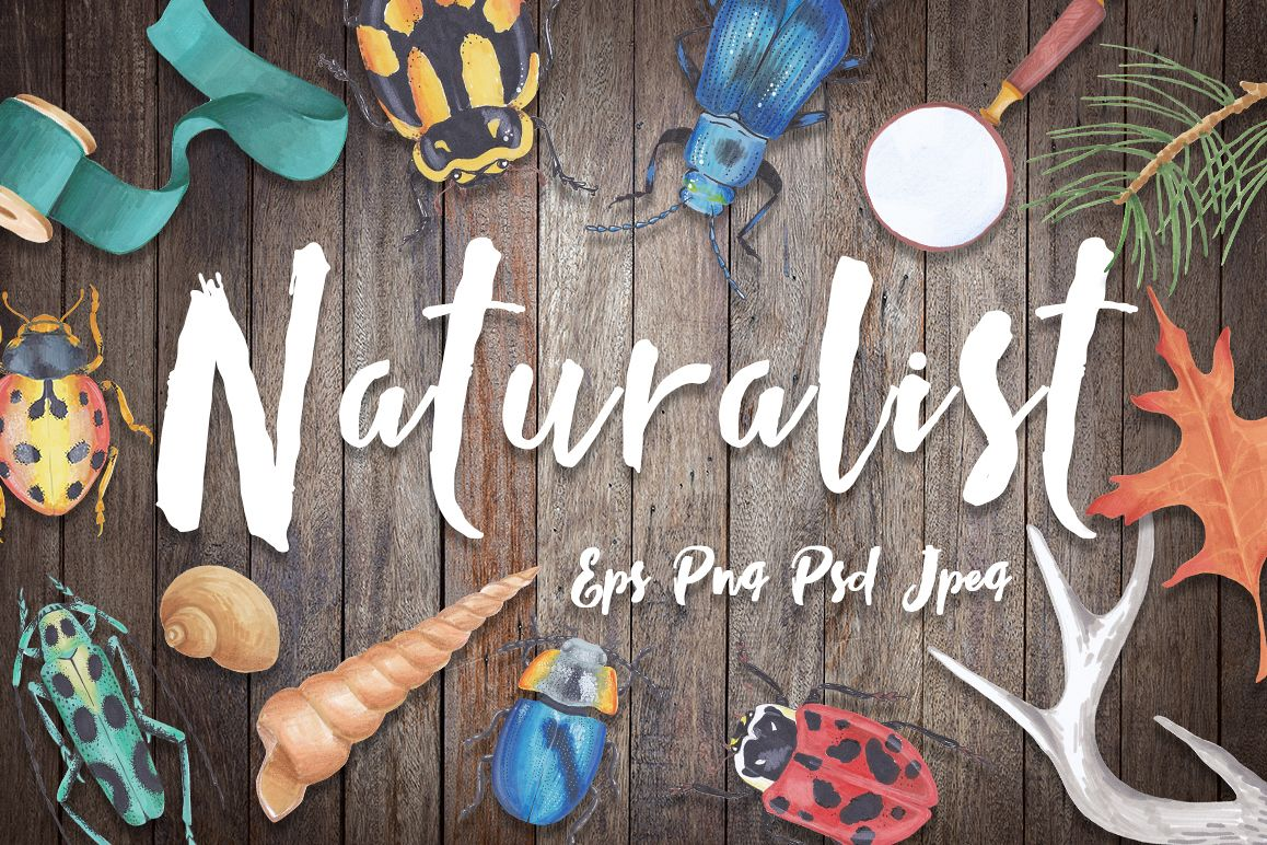 Naturalist - scientific design set example image 1