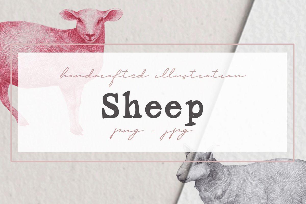 Hand drawn Sheep example image 1