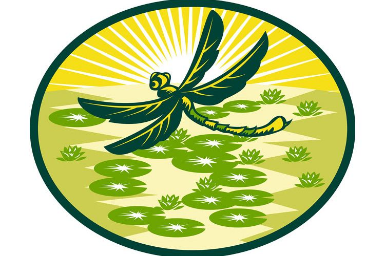 dragonfly flying with lily pads and sunburst example image 1