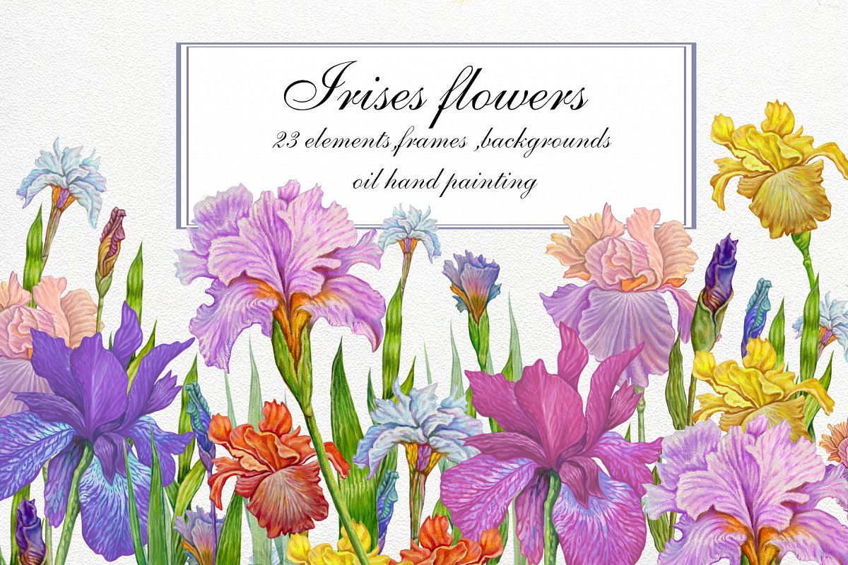 Flower Clipart, iris flowers,23 element Oil hand painting. example image 1
