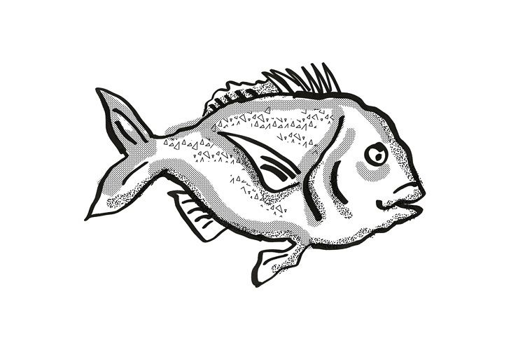 Snapper New Zealand Fish Cartoon Retro Drawing example image 1