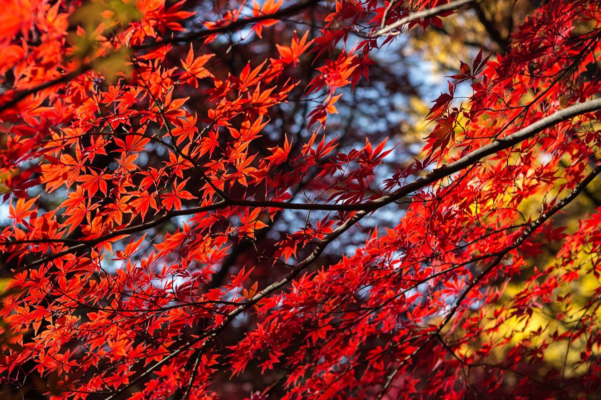 Autumn Leaves #10 example image 1