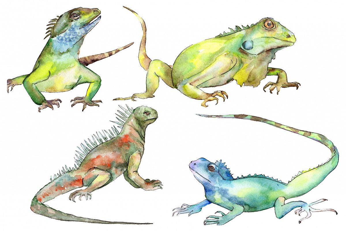 4 iguanas Watercolor png example image 1