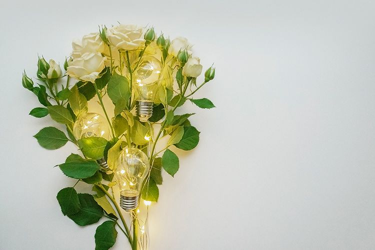 White background with roses and lamps example image 1