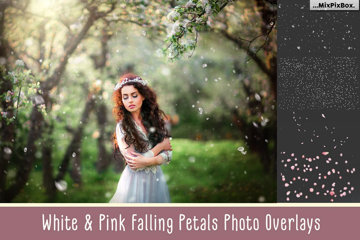 White petals photo overlays example image 1