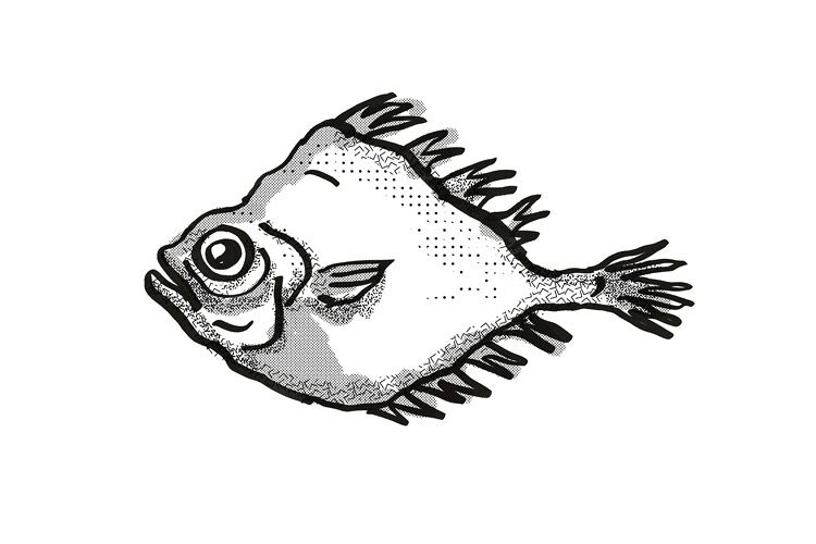 smooth oreo New Zealand Fish Cartoon Retro Drawing example image 1