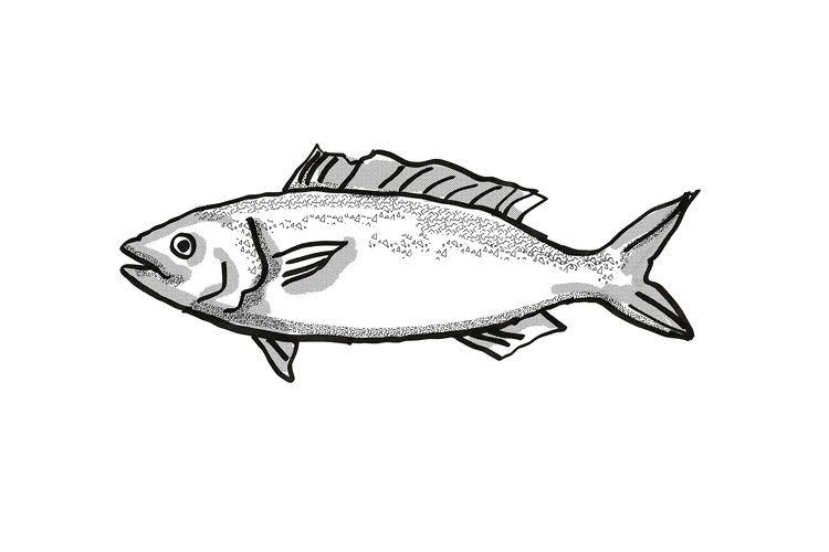 Kahawai New Zealand Fish Cartoon Retro Drawing example image 1