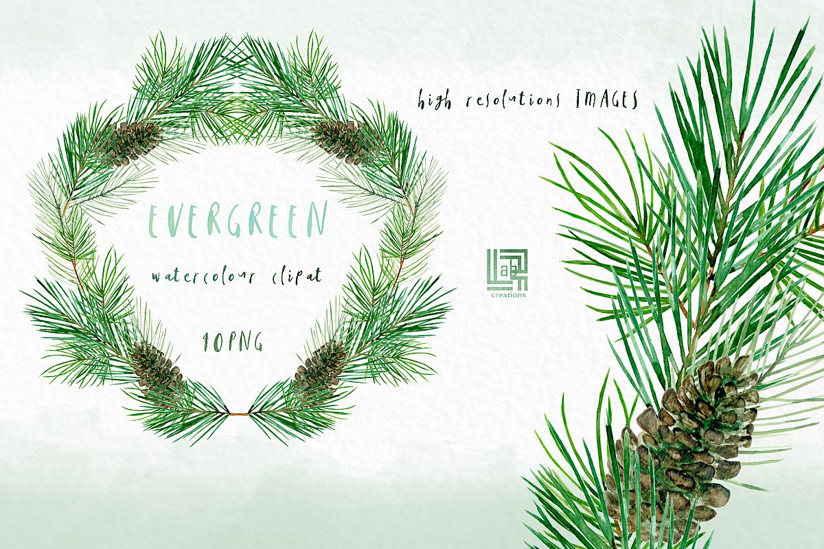 Evergreen. Watercolor clipart example image 1