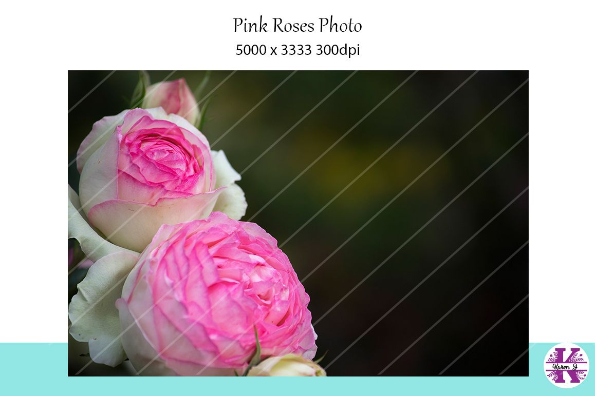 Pink Roses Photo example image 1