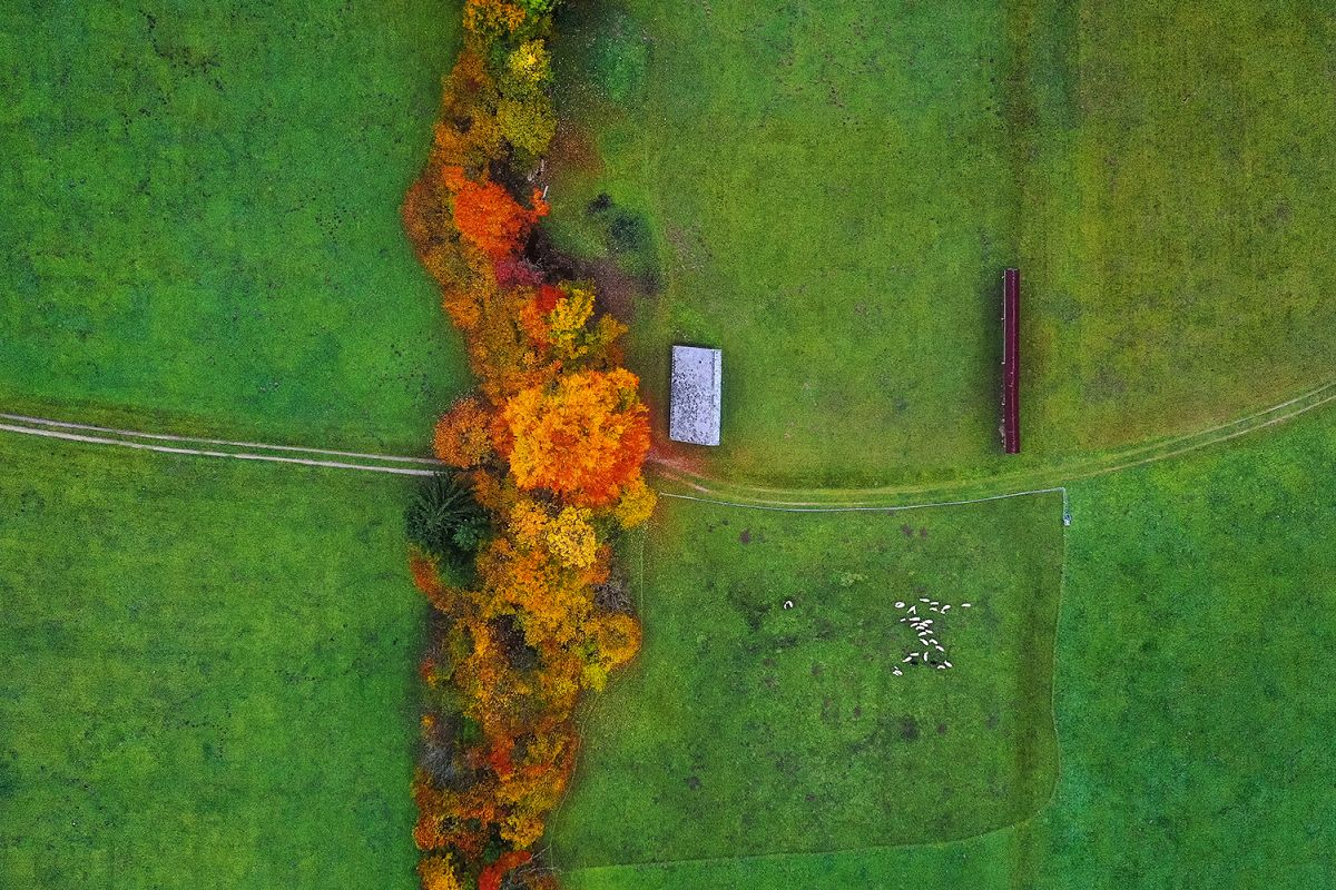 Trees, grass and animals from above example image 1