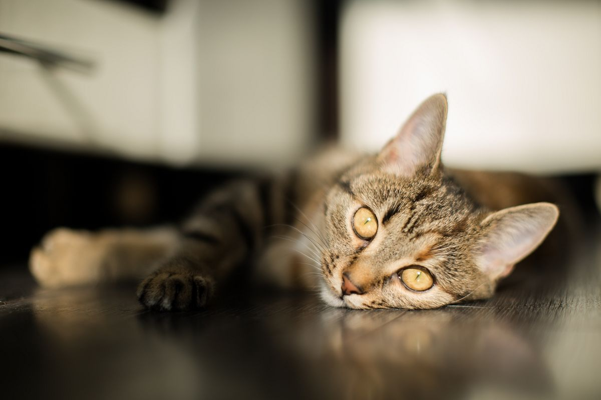 Cat falling a sleep under the sun  example image 1