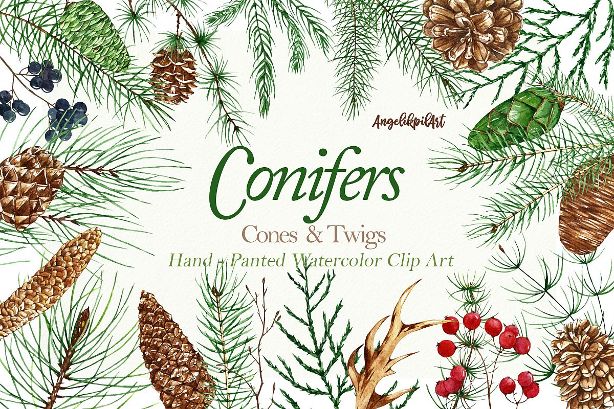 Conifers. Cones&Twigs watercolor example image 1