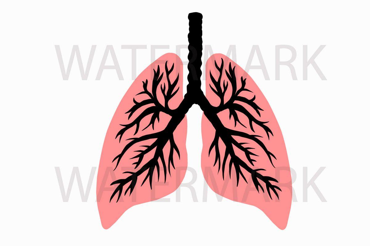 Human Lung Svgjpgpng Hand Drawing