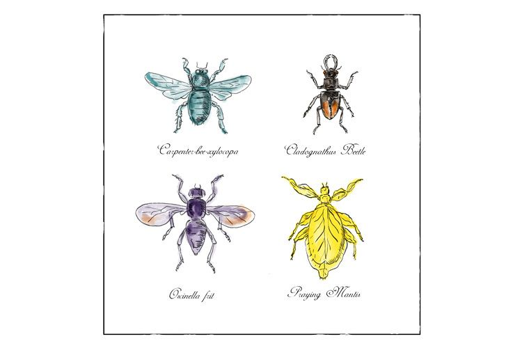 Carpenter Bee, Beetle, Oscinella Frit and Praying Mantis example image 1