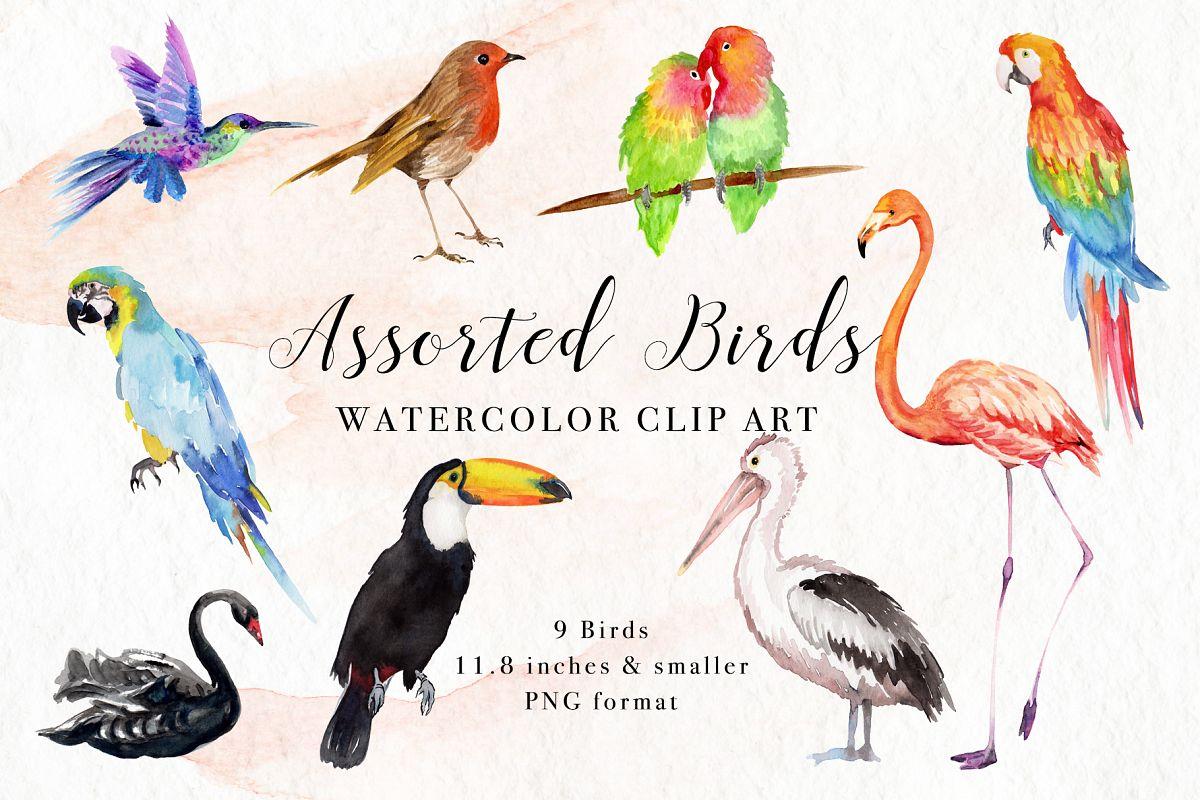 Assorted Birds Watercolor Clip Art example image 1