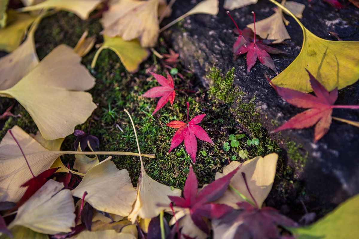 Autumn Essence example image 1
