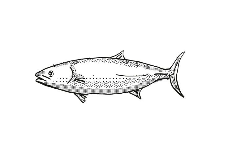 Kingfish New Zealand Fish Cartoon Retro Drawing example image 1