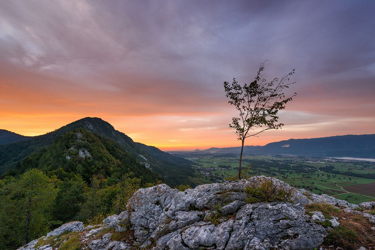 Lonley tree in the mountains at sunrise example image 1