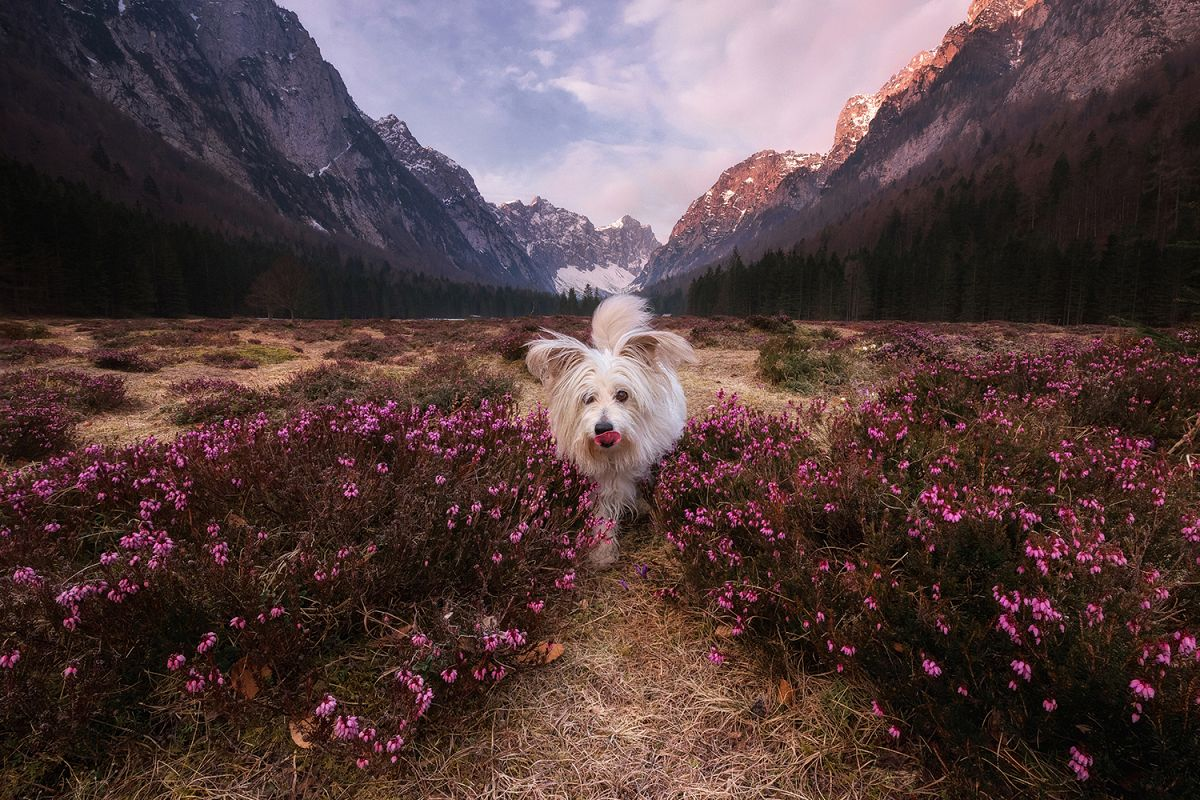 Dog playing among the flowers example image 1
