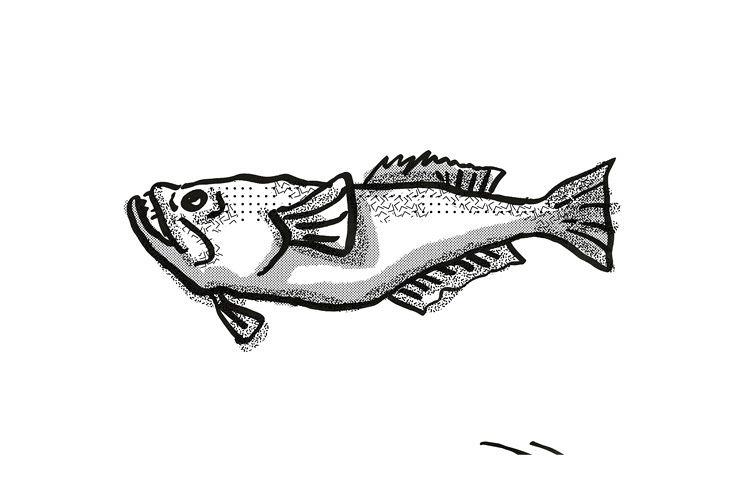 stargazer New Zealand Fish Cartoon Retro Drawing example image 1