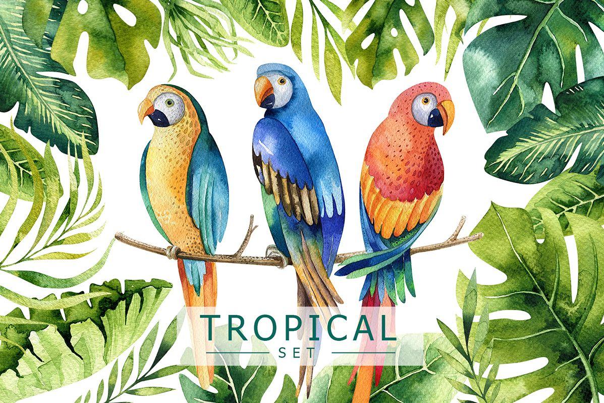 Tropical set I example image 1