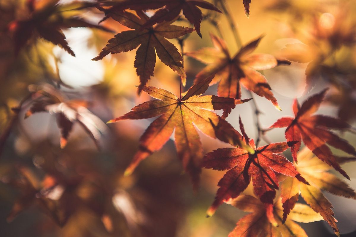 Autumn Leaves #11 example image 1