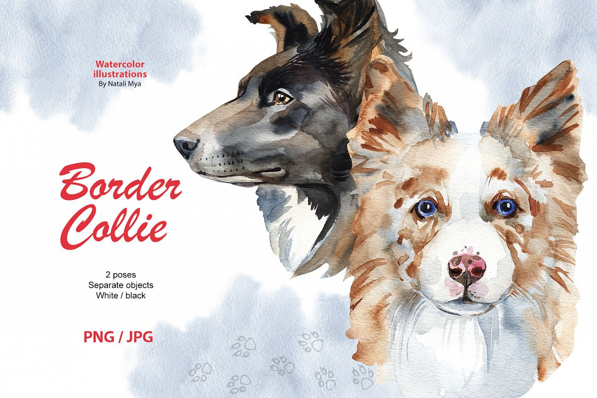 Watercolor dog - Border Collie example image 1